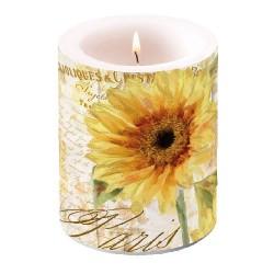 Tournesol ( Sunflower )...