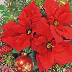 Red Poinsettia Napkins
