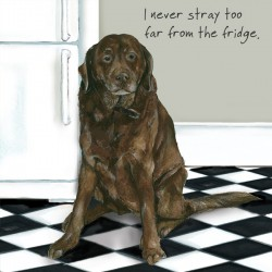 Fridge Stray - Digs and...