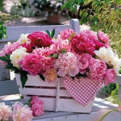 Peonies In Basket Napkins