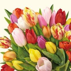 Colourful Tulips Napkins